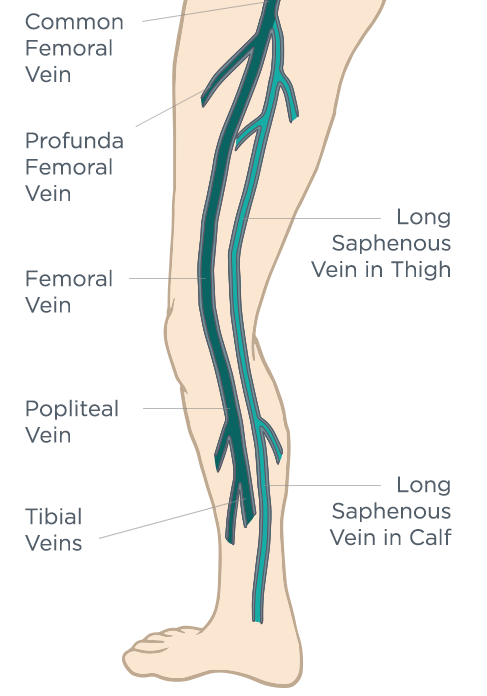 The Ultimate Vein Guide - An animated, illustrative guide to veins ...
